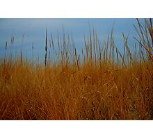 Dune Grass in Winter Photographic Print