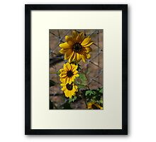 Sun Flower Patch Framed Print