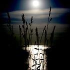 Grassland Romance by aner