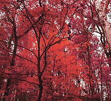 Pink Forest by liaferro