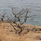 Wind Blown Hawaiian Tree by pinklilypress