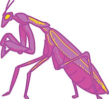 Purple Mantis by dieselbirdy