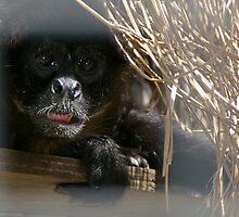 Spider Monkey by odarkeone