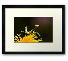 Green on Yellow Framed Print