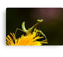 Green on Yellow Canvas Print