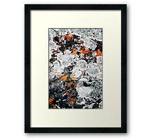 Orange and Grey Lichen #1 Framed Print