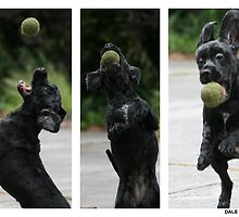 Get the Ball! by dale rogers