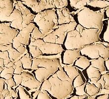 Mud Cracks by Syman  Kaye