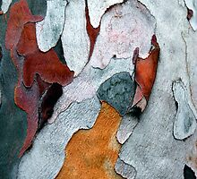 Paper Bark #1 by Syman  Kaye