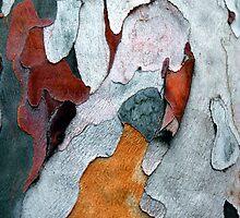 Paper Bark #1 by Syman  Kaye