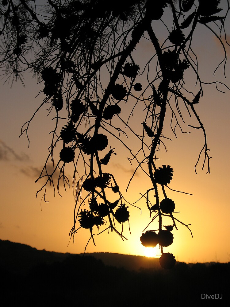 Sunset branches by DiveDJ