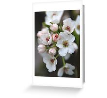 White and Pink Flowers Greeting Card