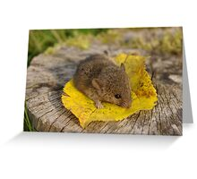 Little Guest Greeting Card