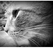 Stray Cat (B&W) Photographic Print