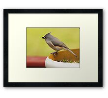 Titmouse Framed Print