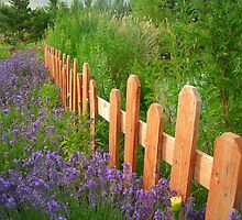 Picked Fence by AnniesPhotos