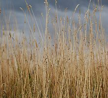 Wheat & Sky by Photo Finish
