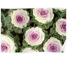 White and Purple Flowers in Japan Poster