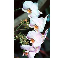 Cascade Of Orchids Photographic Print