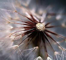 Just Dandy! by Jacq Wilson