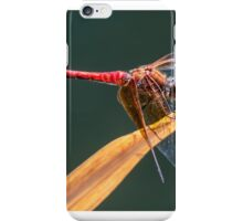 Dragonfly. iPhone Case/Skin