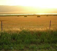 Golden Fields by AnniesPhotos