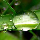 Morning Dew by Mark Moskvitch