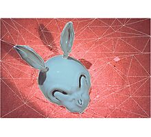 Rabbit Photographic Print