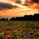 Pumpkin Skies by Keeli