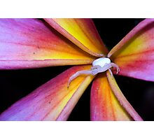 Crab Spider on Frangipani (2) Photographic Print