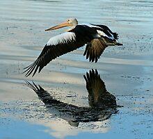 Pelican in Flight by Mark Snelson
