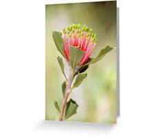 Matchstick Banksia Greeting Card