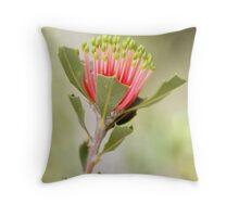 Matchstick Banksia Throw Pillow