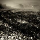 Tracks In The Mist - The South Downs by melmoth