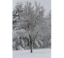 Fresh Fallin Snow.. Photographic Print