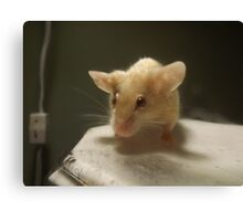 Mouse 1 Canvas Print
