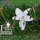 Holiday Lily - Feliz Navidad by Jane Neill-Hancock