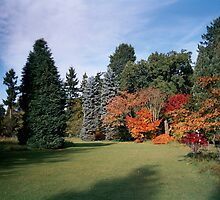 Autumn at Thorpe Perrow by hilarydougill