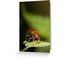 Orange Beetle Greeting Card