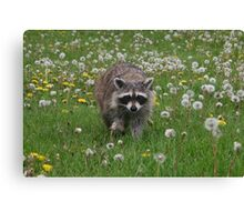 Hey!  What you got there??? Canvas Print