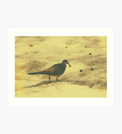 Spotted Dove v.2 Art Print