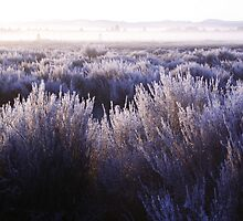 Frozen Taupo Morning by 3rdCulture