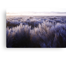 Frozen Taupo Morning Canvas Print