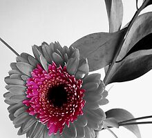 True Colors by Deborah  Bowness