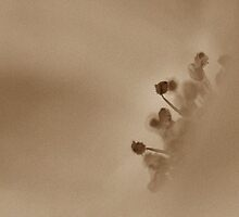Abutilon Sepia by englishbayboys