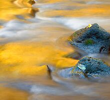 Golden Refuge by DawsonImages