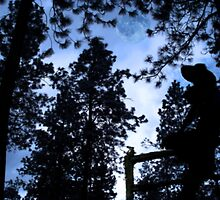 Forest Day Dreams by Gregory Ewanowich