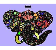 DC Elephant BLK Photographic Print