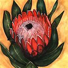 Protea by sweetscent62