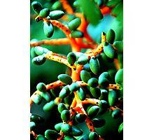 Beads of Santa Elena Photographic Print